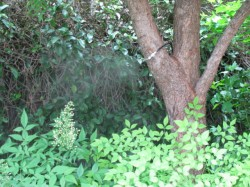 NOZZLE MISTING IN TREE