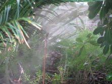 Mosquito Kill Zone!